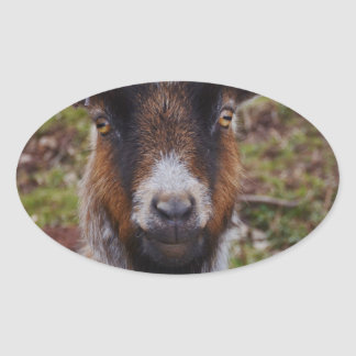 Goat close up. oval sticker
