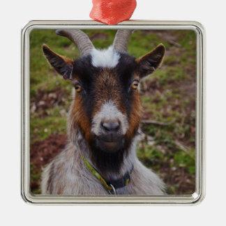 Goat close up. Silver-Colored square decoration