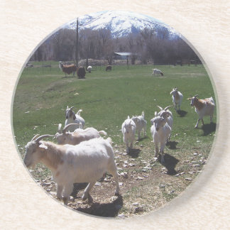 Goat Follow the Leader Drink Coasters