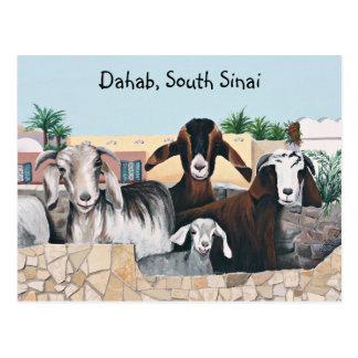 Goat Greetings II Postcard