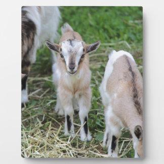 goat in the farm plaque