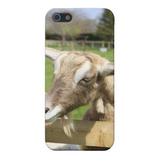 Goat iPhone Case iPhone 5 Cases