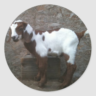 Goat kid sticker