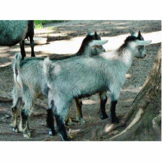 Goat Kids Photo Sculpture
