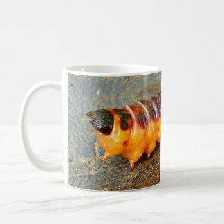 Goat Moth Caterpillar Bug Mug