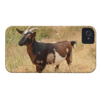 Goat Picture iPhone 4 Case-Mate Cases