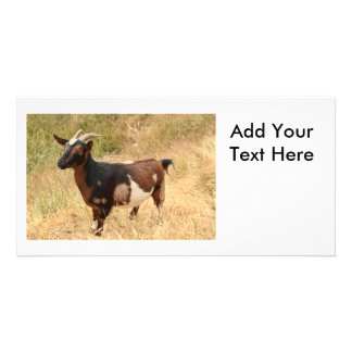 Goat Picture Photo Card Template