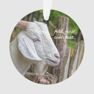 Goat Sees Greener Grass