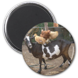 Goat taxi magnet