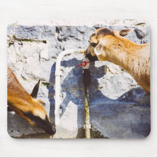 Goats Drinking Water, Animal Photography Mouse Pad