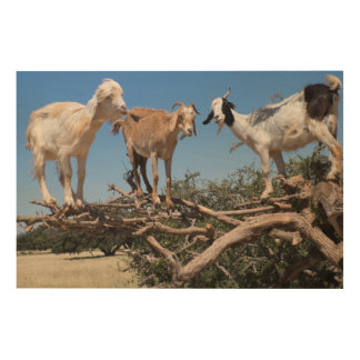 Goats in a Tree Wood Print
