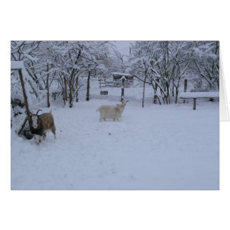 goats in snow card