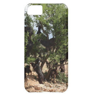 Goats in Trees - Argan Trees Morocco iPhone 5C Cases