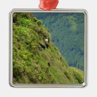 Goats on a very steep hillside Silver-Colored square decoration
