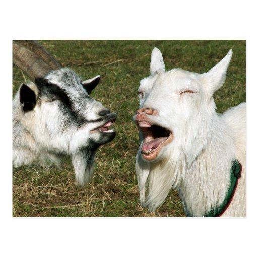 Goats postcard