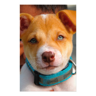 Gold and White Puppy Dog with Blue Collar 14 Cm X 21.5 Cm Flyer