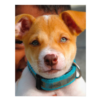 Gold and White Puppy Dog with Blue Collar 21.5 Cm X 28 Cm Flyer