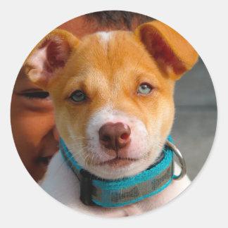 Gold and White Puppy Dog with Blue Collar Round Sticker