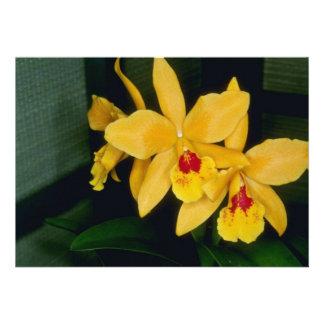 Gold Digger Laeliocattelaya flowers Custom Invites