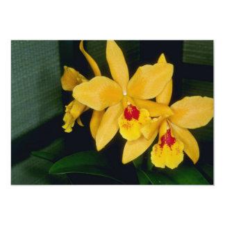 Gold Digger (Laeliocattelaya) flowers Custom Invites