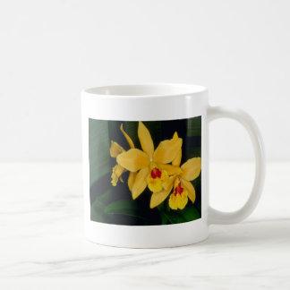 Gold Digger (Laeliocattelaya) flowers Coffee Mugs