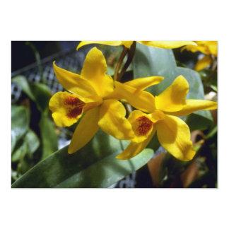 Gold Digger (Laeliocattleya) flowers 13 Cm X 18 Cm Invitation Card