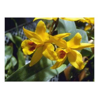 Gold Digger Laeliocattleya flowers Invites