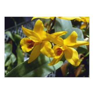 Gold Digger (Laeliocattleya) flowers Invites