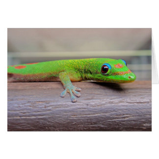 Gold Dust Day Gecko Card