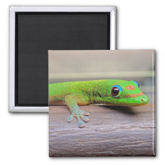 Gold Dust Day Gecko Magnet
