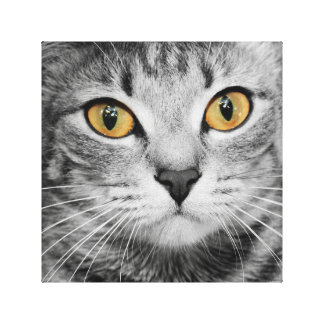 GOLD EYED TABBY IN BLACK AND WHITE CANVAS PRINT