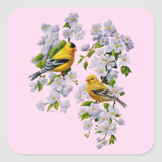 Gold Finch Birds & Apple Tree Pink Square Sticker