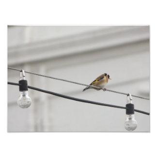 Gold Finch on the Light's Art Photo