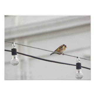 Gold Finch on the Light's Photo Print