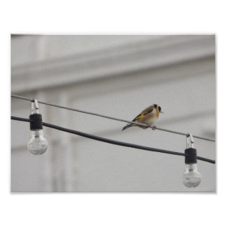 Gold Finch on the Light's Poster