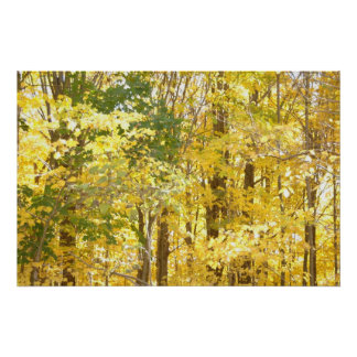 Gold Foliage Poster