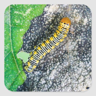 Gold Moth Caterpillar Square Sticker