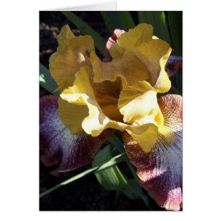 Gold on Purple Iris Card
