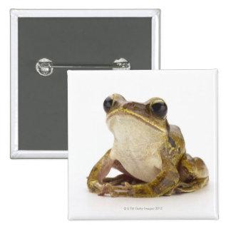 Gold tree frog 15 cm square badge