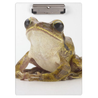 Gold tree frog clipboard