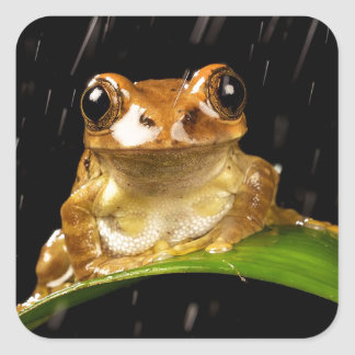 Gold Tree Frog in the Rain Image Square Sticker