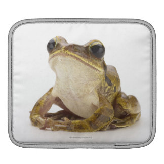 Gold tree frog iPad sleeve