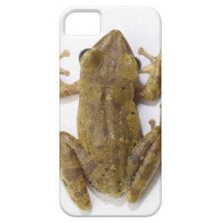 Gold tree frog iPhone 5 covers