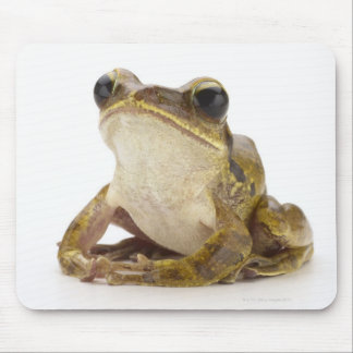 Gold tree frog mouse mat