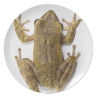 Gold tree frog plate