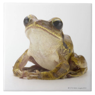Gold tree frog tile