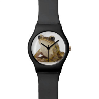 Gold tree frog watch