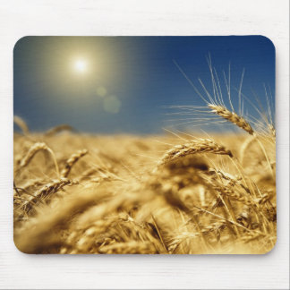 Gold wheat and blue sky with sun mouse pad