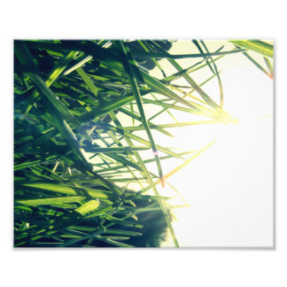 Golden Afternoon Print Photo