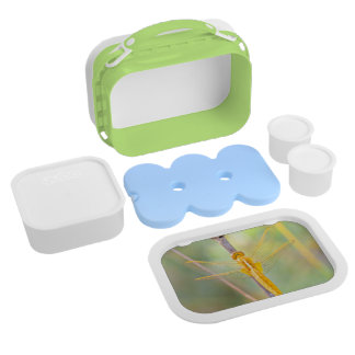 Golden and yellow dragonfly lunchboxes